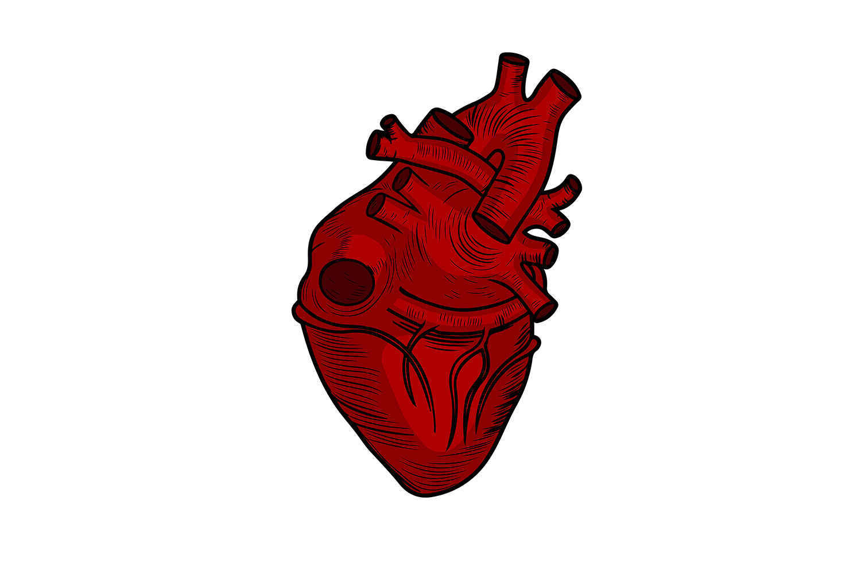 Corazón Coraza (1).JPG
