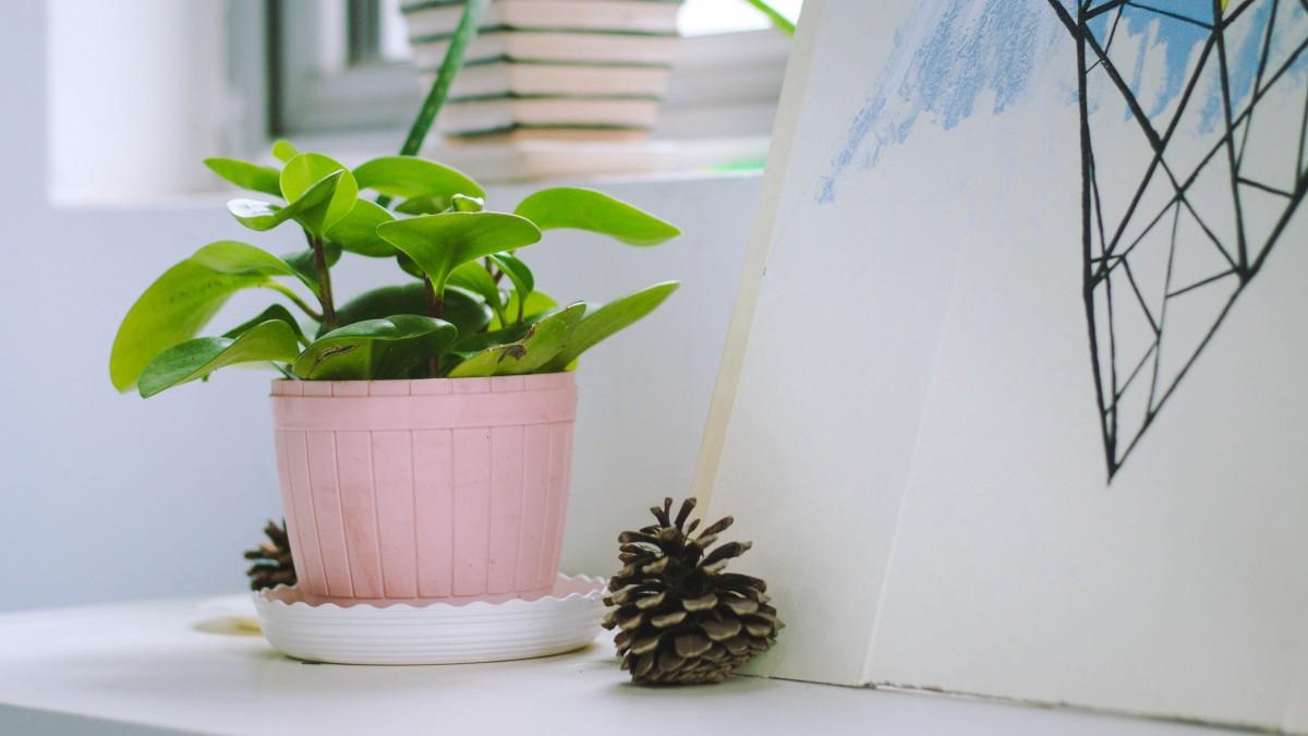 indoor_potted_plants_desktop-810678.jpg!d.jpg