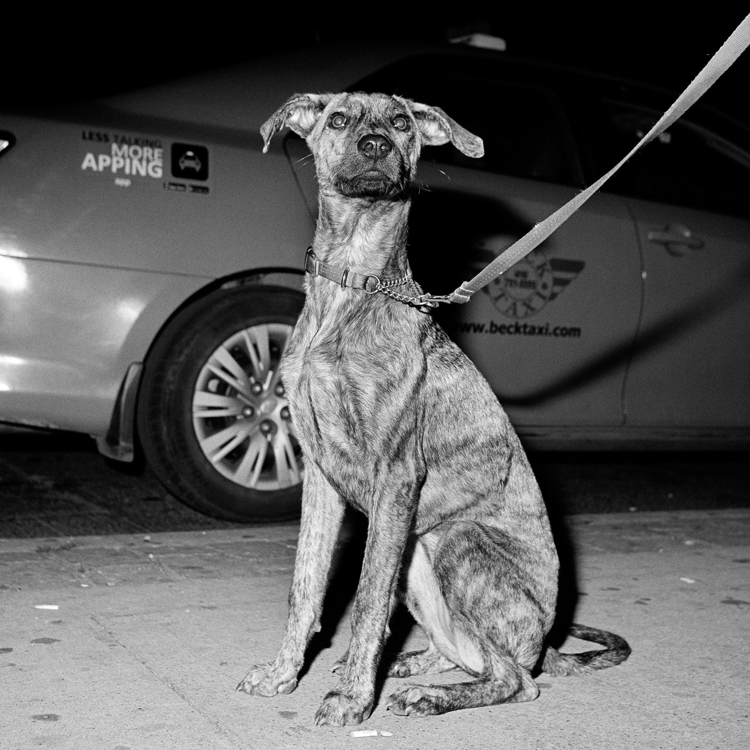 Marlo's dog 15x15%22.jpg