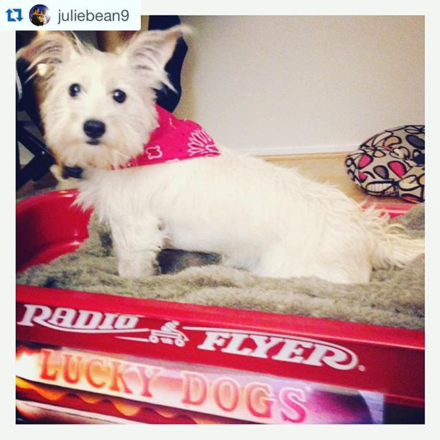 A lucky dog, indeed! 📸 @juliebean9  #Nola @luckydogsnola #neworleans #dog #radioflyer #tradition #louisiana #hotdog #luckydog #pup #ride