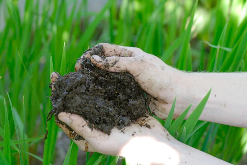 "A handful of rich organic soil, or ""muck,"" from a wetland."