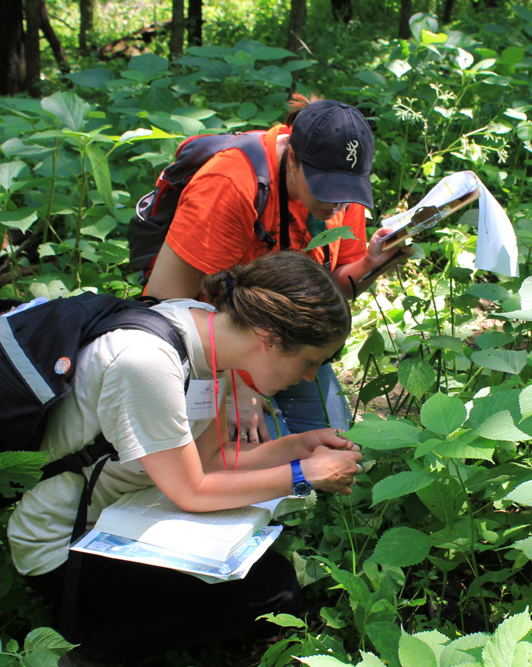 Anna Braum (left) of the Chicago Botanic Garden and Cori Morse work to identify a plant species at Hickory Hollow during the BioBlitz.