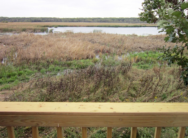 The view of the marsh at Oak Ridge on an October day from the new low viewing platform that was recently completed. Photo by Vera Leopold/TWI.