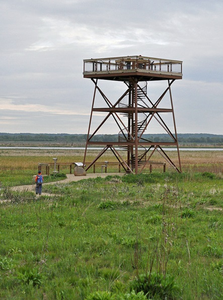 Great birding was available from the Nolan Observation Tower at the Dixon Waterfowl Refuge. Photo by Matthew Cvetas.