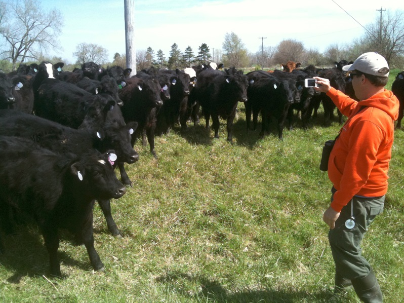 Cautious but curious yearling cows encircled us in one pasture while Jason got some photos. Photo by Vera Leopold/TWI