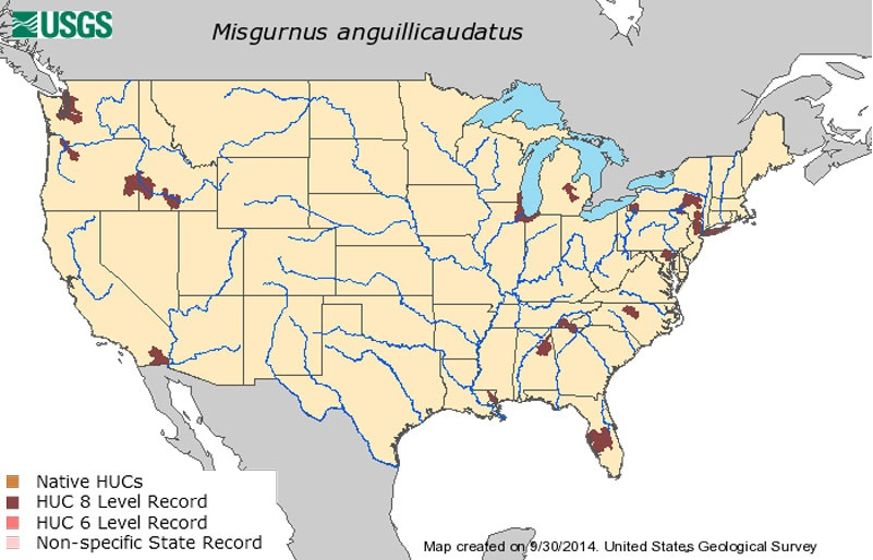 This U.S. Geological Survey map shows locations where the Oriental weather loach has been found.