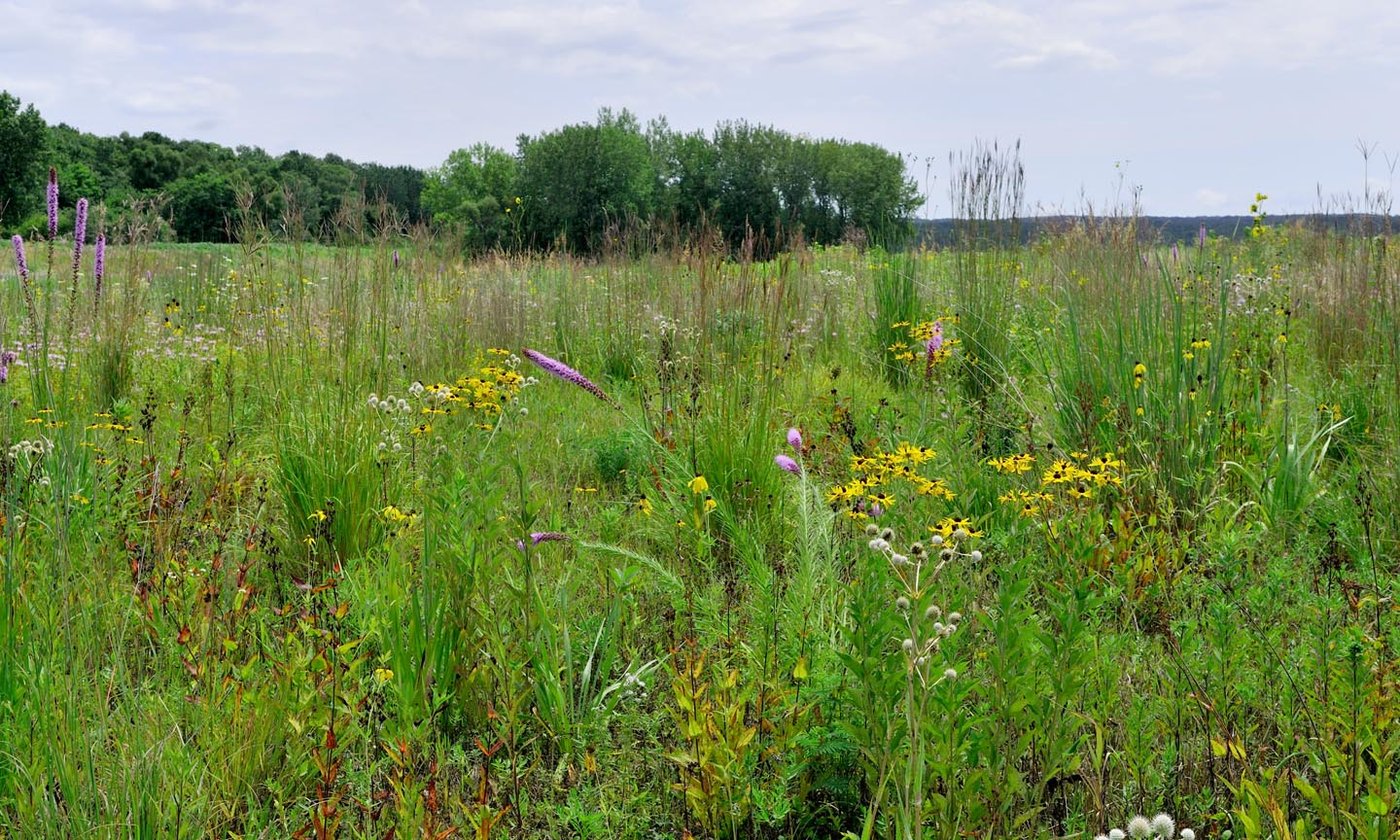 An example of a wet prairie at the Dixon Waterfowl Refuge.