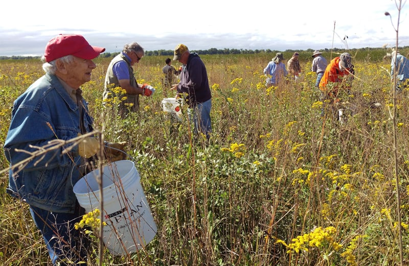 As the sun emerged, the group moved into the interior of the Refuge to harvest seed from the rich prairie there.