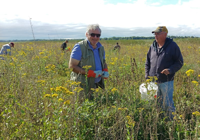 TWI board member and former chairman of the board Chris Kerns (left) joined the seed harvest!