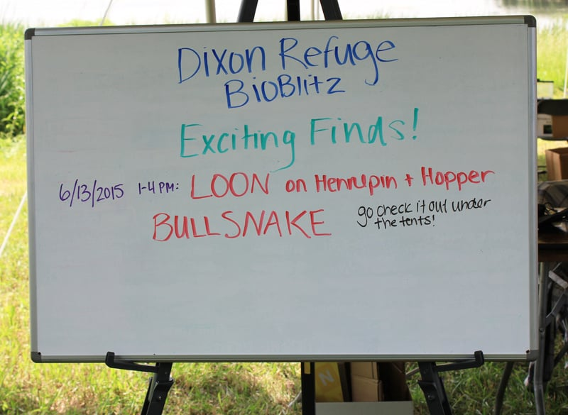 Exciting discoveries were posted on a board at the BioBlitz base camp. Photo by Beth Botts.