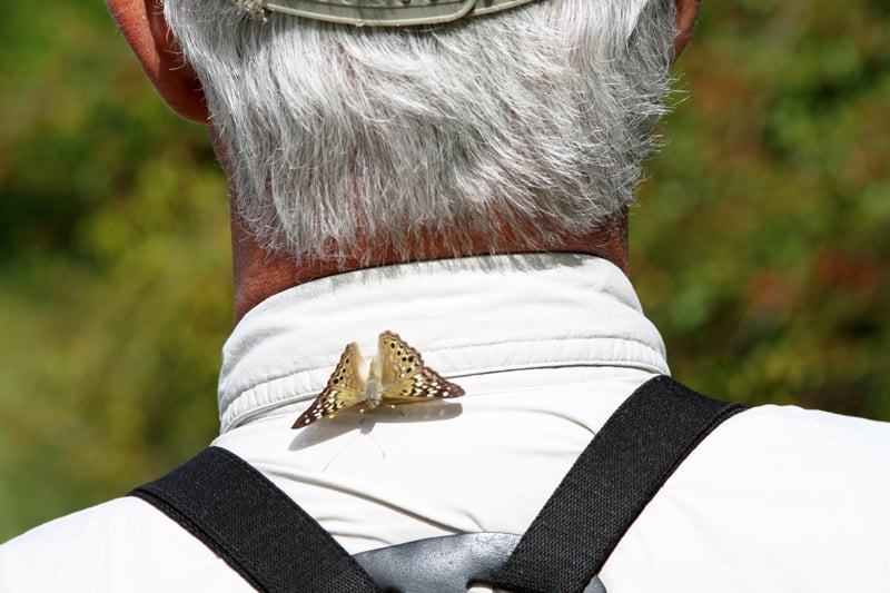 BioBlitz participants got up close and personal with many Refuge residents, including this hackberry butterfly! Photo by David Miller.