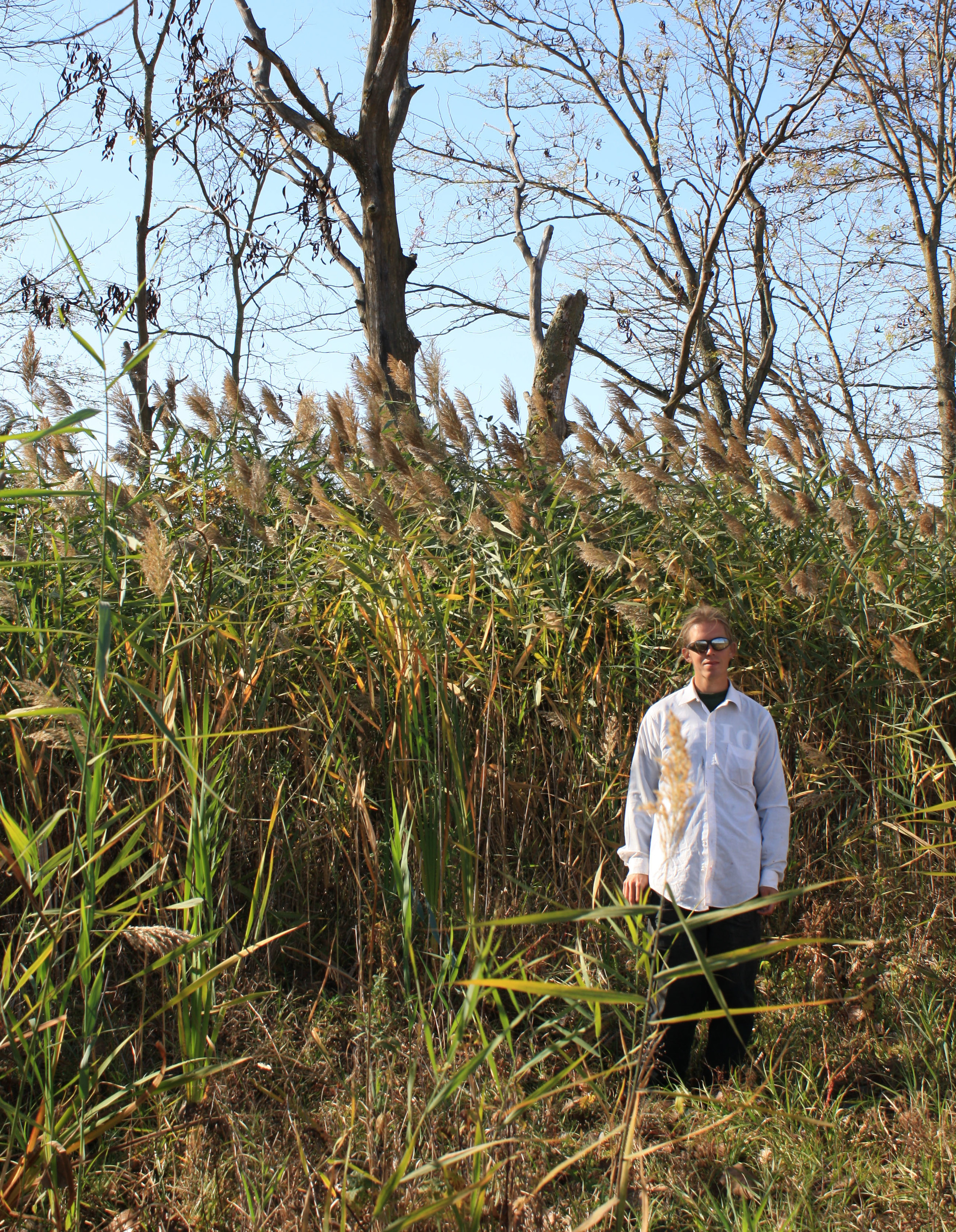 A TWI field restoration crew member next to a tall stand of invasive Phragmites at Midewin.