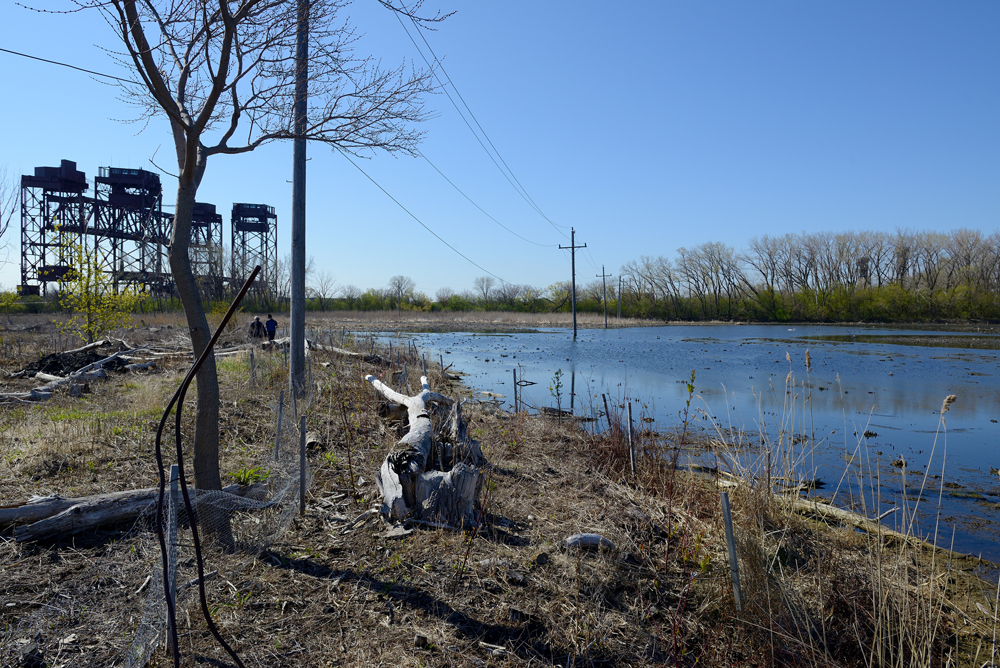 A view of Indian Ridge Marsh in the Calumet area, where TWI will begin restoration in 2016 in collaboration with Audubon Great Lakes.