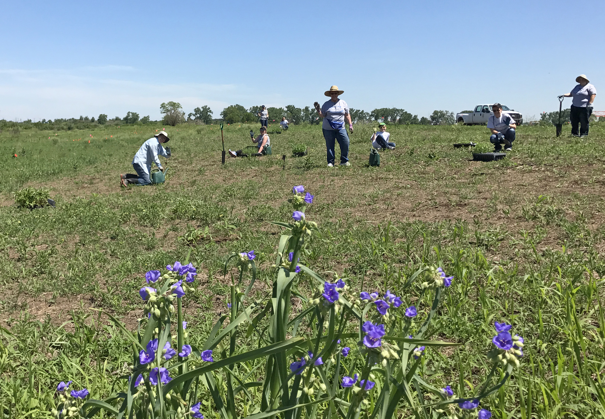 A group of Ecolab volunteers gets to work behind a blooming patch of Ohio spiderwort.  Photo by Allison Cisneros/TNC.