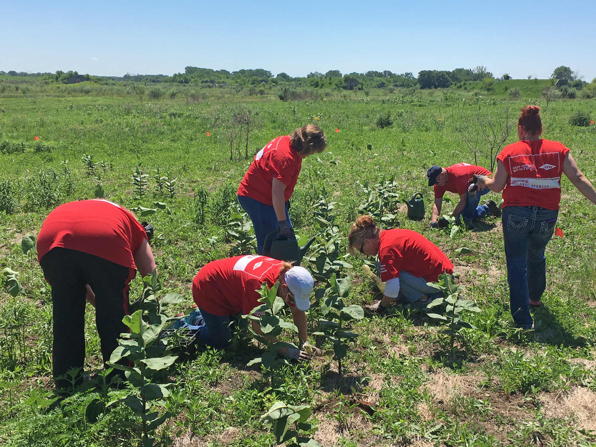 Volunteers from the Dow Chemical Company work hard to install plugs (seedlings) of prairie species amid a stand of native milkweed.