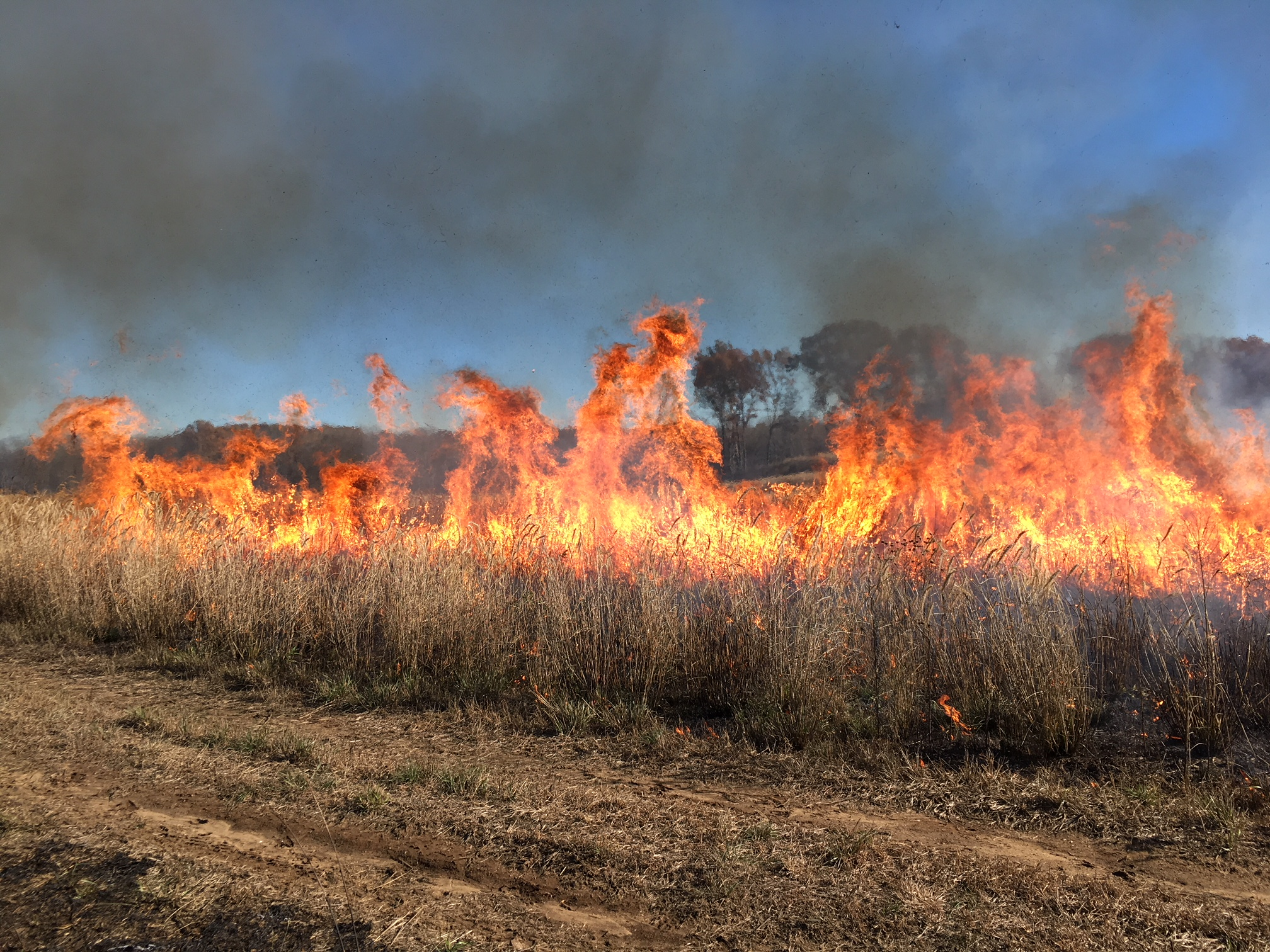 A line of fire cruises through the prairie this fall at the Dixon Waterfowl Refuge. Photo by Trevor Edmonson/TWI.