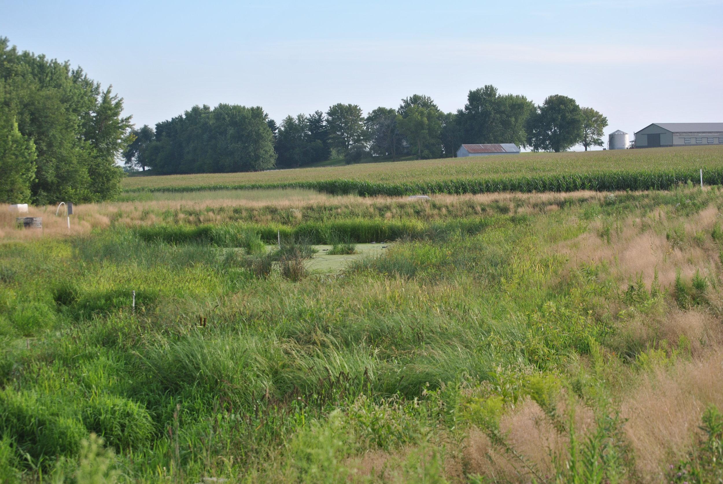 Growing Wetlands for Clean Water