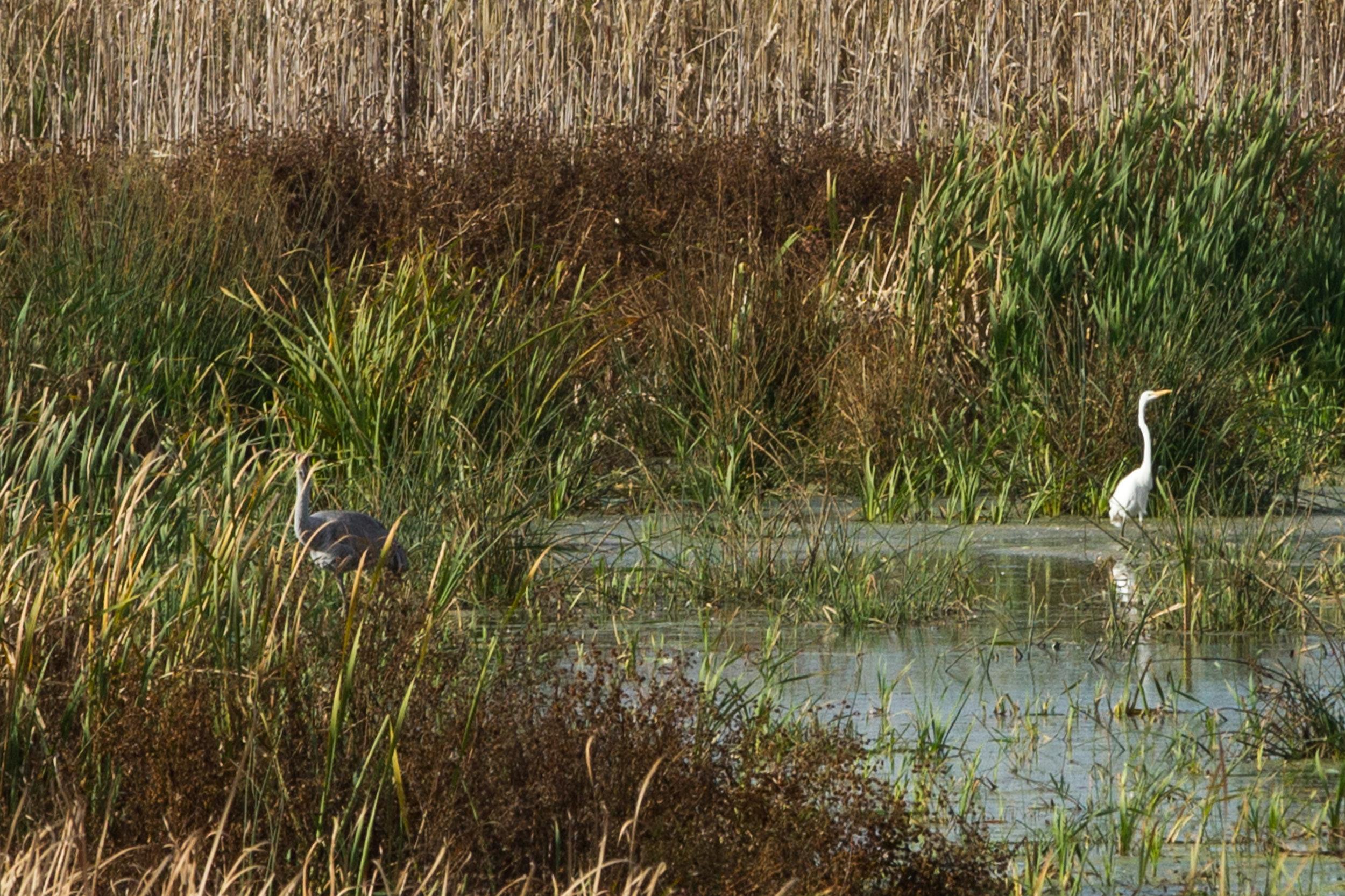 Dixon Waterfowl Refuge
