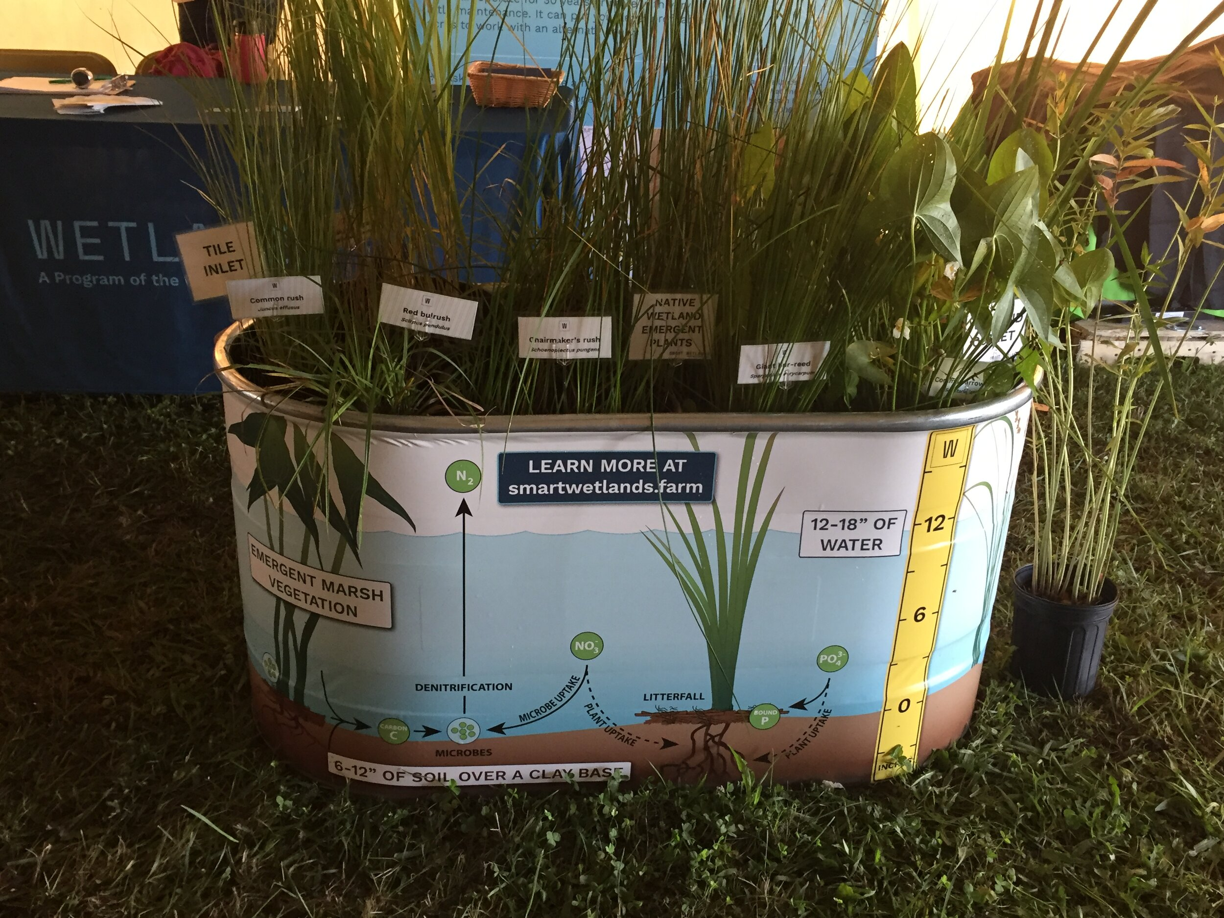 TWI's Farm Progress Show display included an informative small-scale replica of a Smart Wetland. Photo by Jean McGuire/TWI.