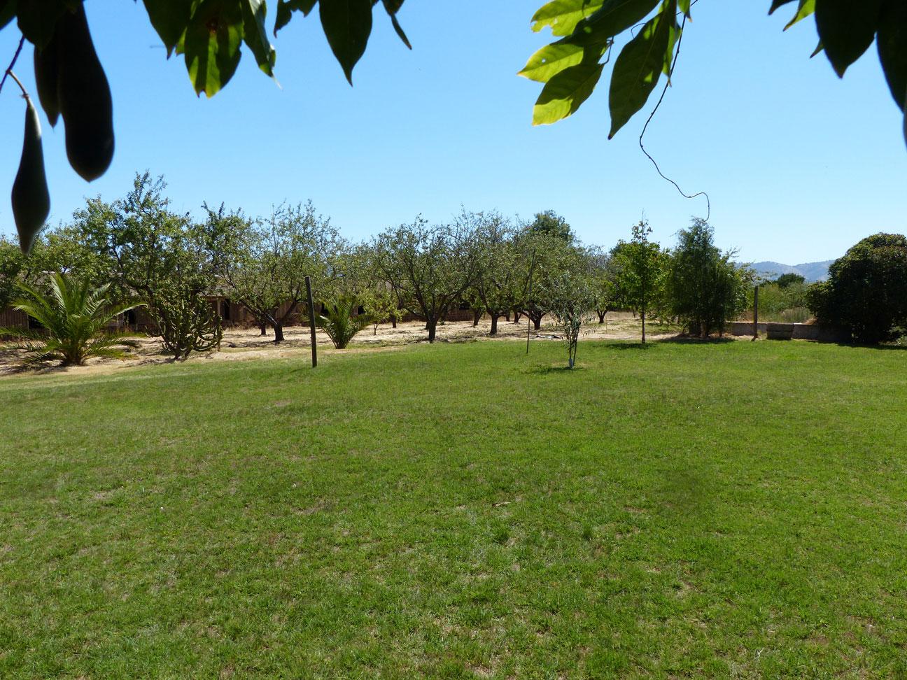 Fruit trees on the farm