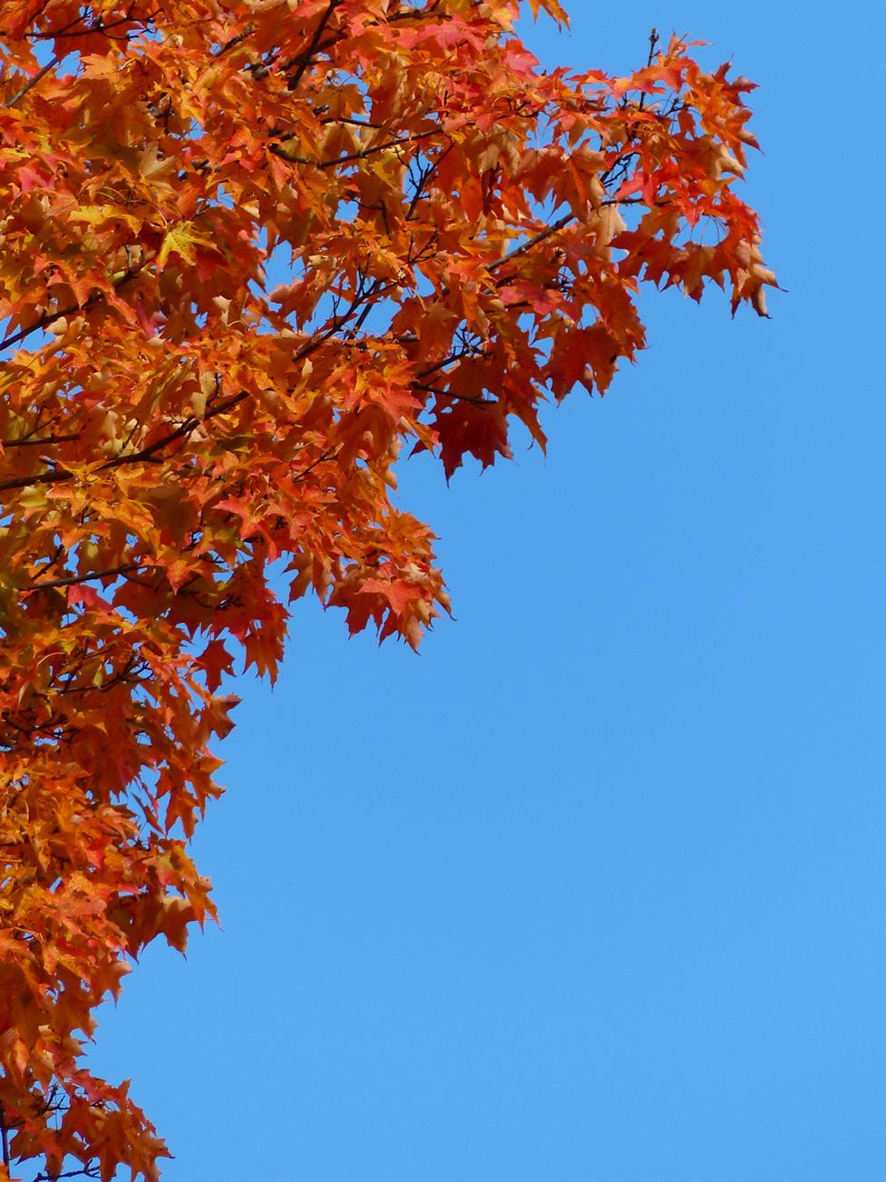orange.tree.jpg
