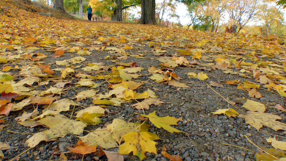 ground.leaves.jpg