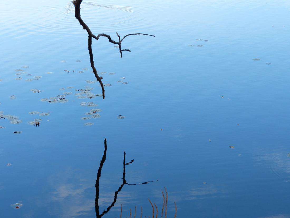 The stillness of water reveals stark reflections