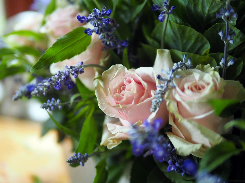 roses.cu2.jpg