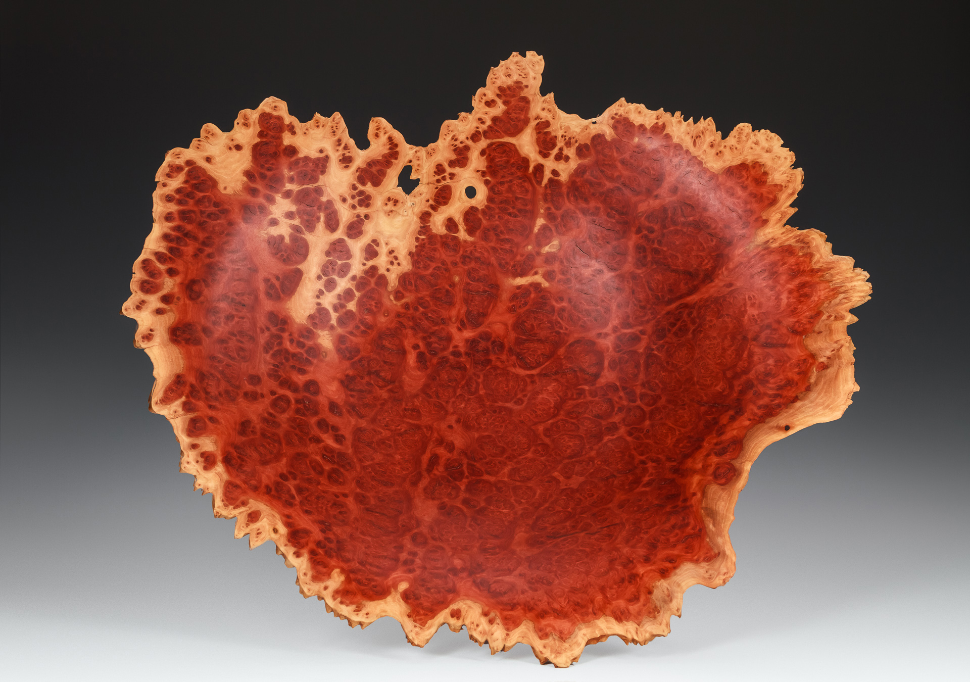 red morrel eucalyptus burl