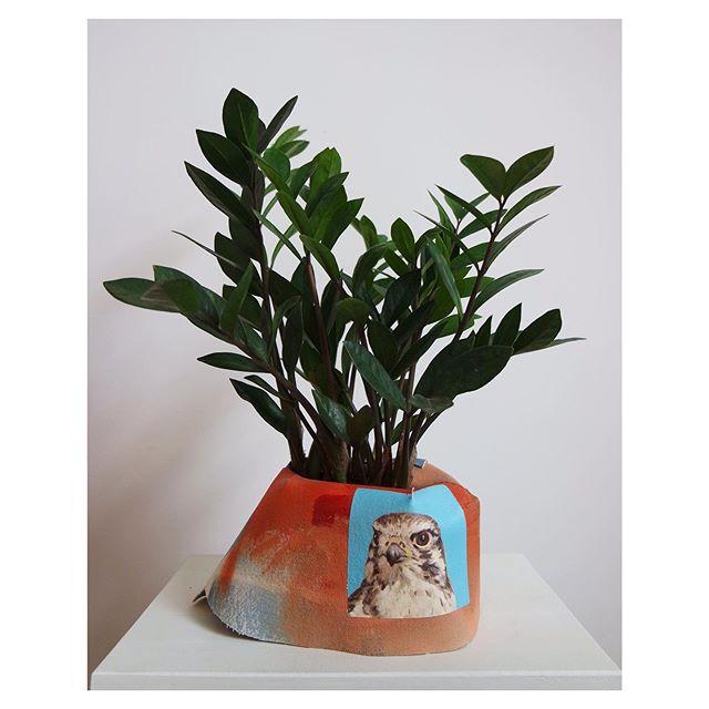 Old friend 🐦 . . . . . . . . . . . . . . . . #art #contemporaryart #contemporarypainting #painting #oilpainting #sculpture #fibersculpture #portrait #bird #raptor #artwithplants #plants #zzplant #plantnest #indoorwilderness #nature #landscapepainting #emergingartist #newyork #newyorkartist #artstudio #juliablume