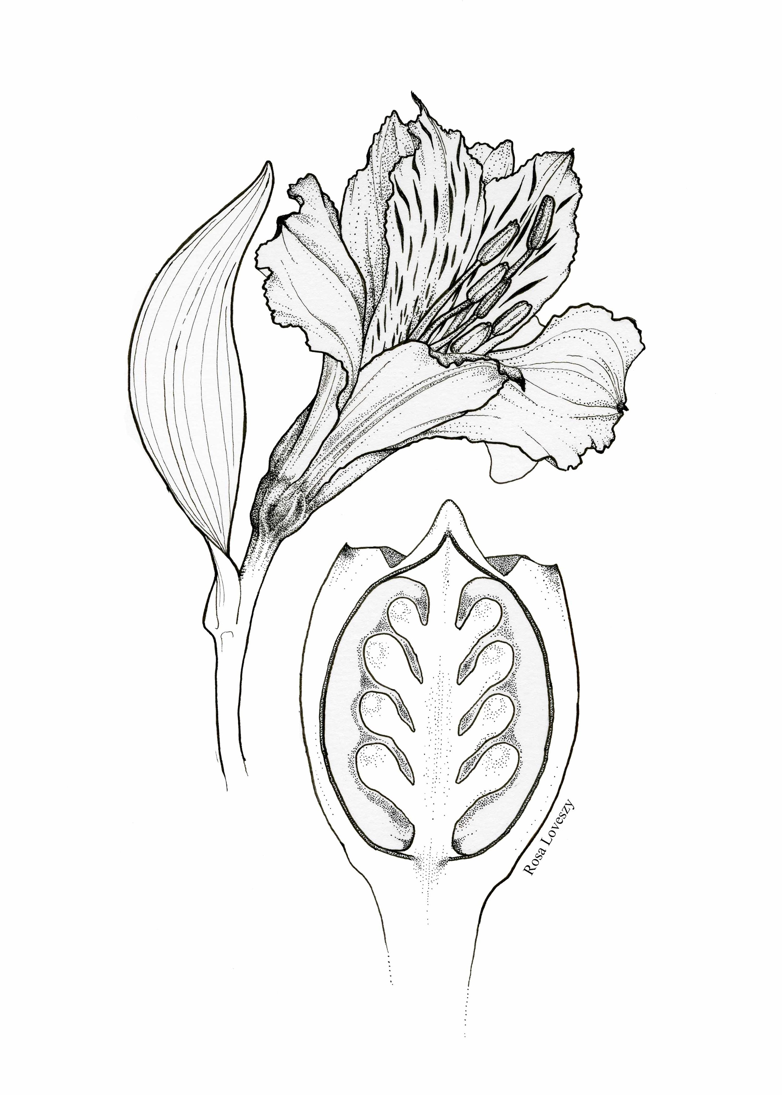 Botanical Plate v1.jpg