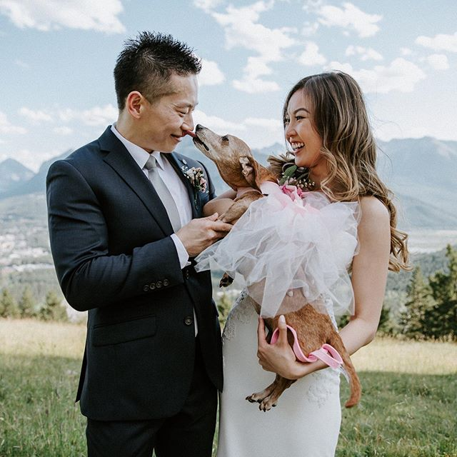 Gah!!! I'm so excited to share this. Jen and Mao eloped in Banff and my heart is bursting from happiness. It is incredible that I get to work with beautiful souls like this. ⠀ ⠀ #banffviewpoint #banffelopement #banff #banffelopementphotograoher #weddingdog #tofinoelopementphotographer