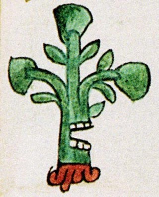 "An Aztec glyph translated as ""Place of Many Avocados,"" a detail from the  Codex Mendoza  (1542). Credit: Courtesy Mexicolore."