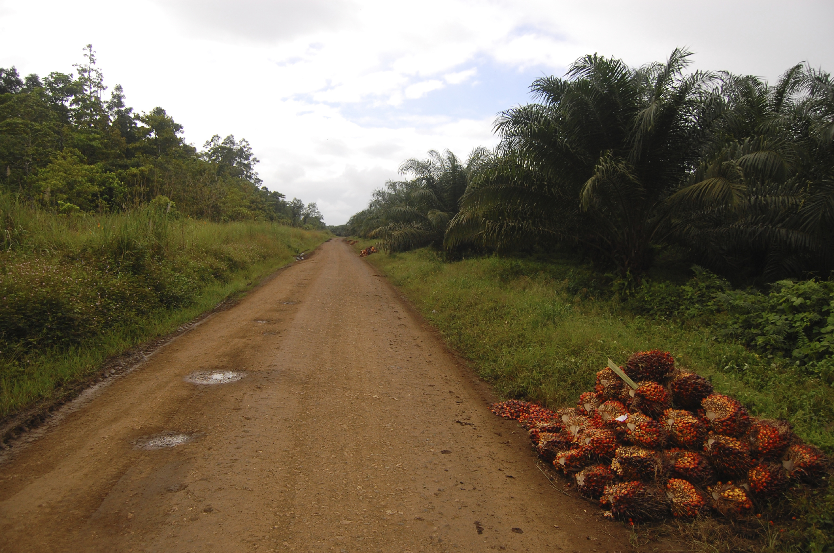For more information on Palm Oil, click on this image.