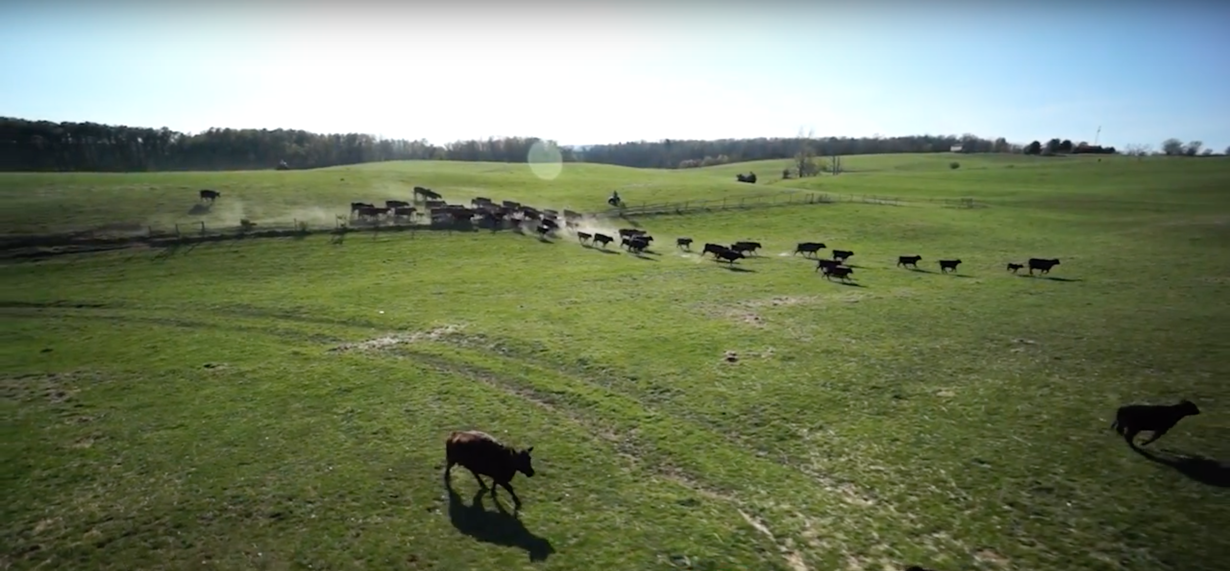 The Bagley Family raises their cattle in the heart of Virginia's Shenandoah Valley.