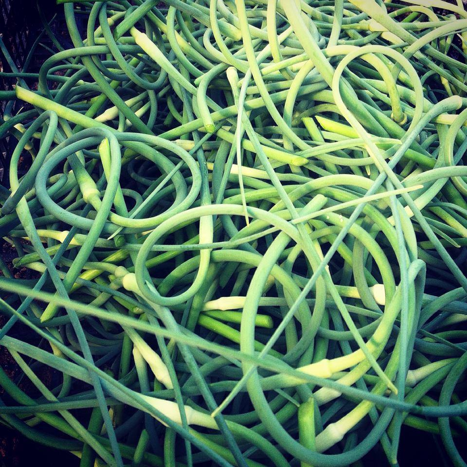 Garlic Scapes.jpeg