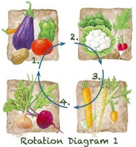A depiction of a crop rotation