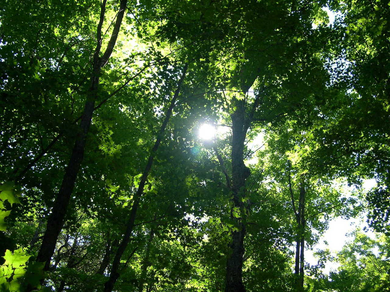 forest-1471223-1280x960.jpg