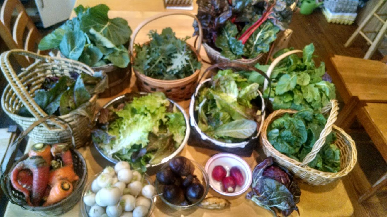 Typical Winter Garden Harvest, from Late December