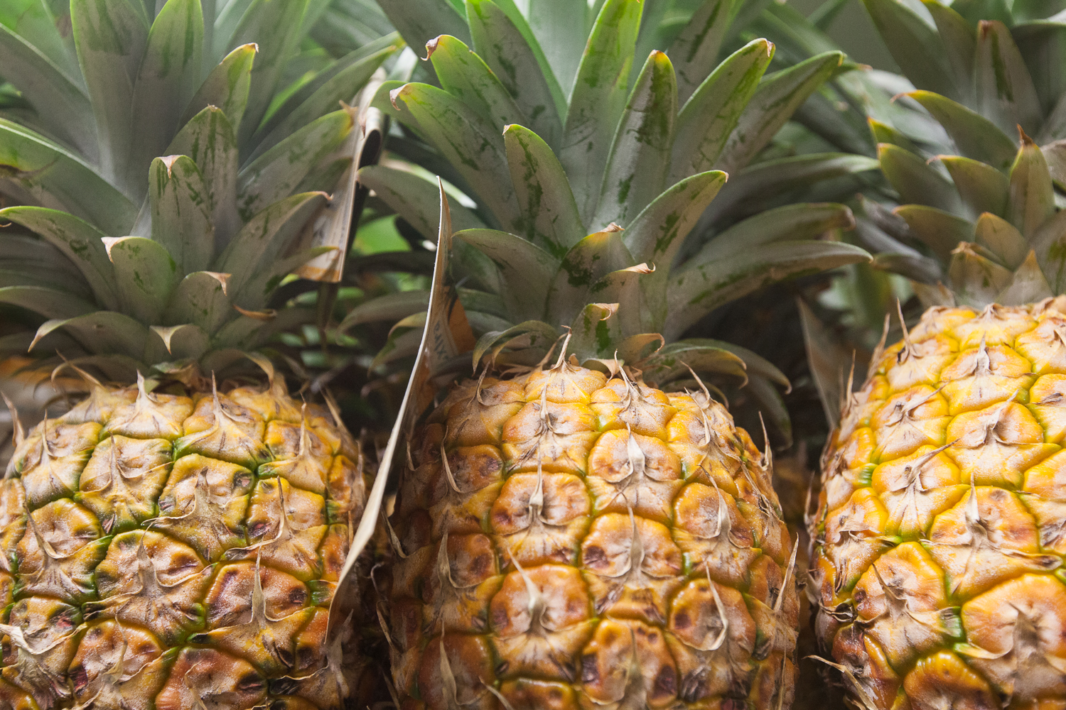Mana Foods Display of Locally Grown Pineapple