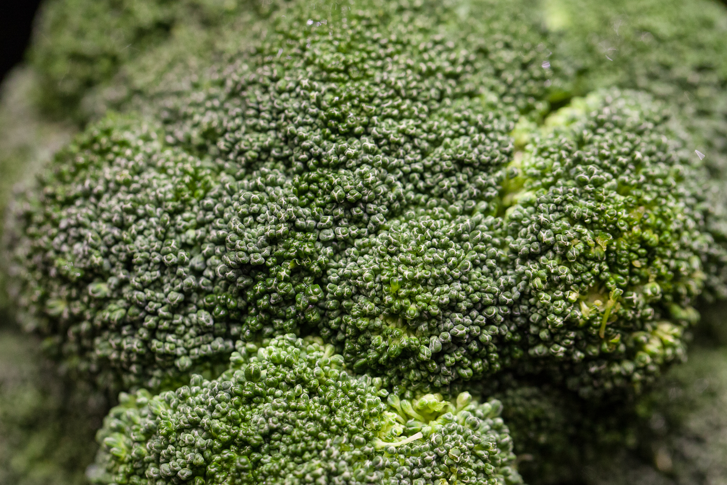 broccoli-organic-produce-department-mana-foods.jpg