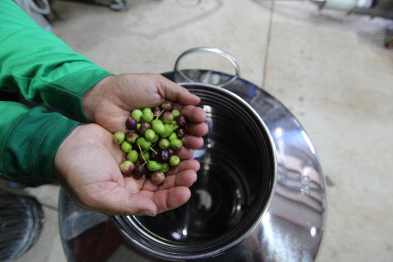 hands_olives.jpg