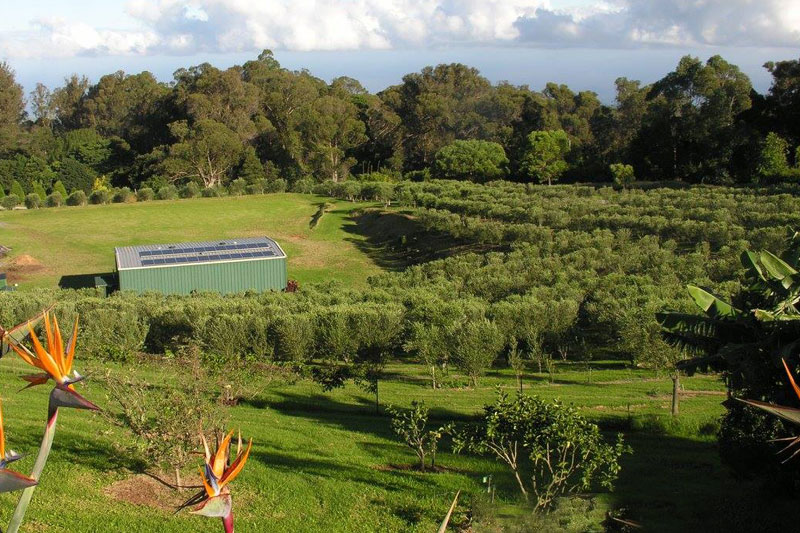 trees_bird_paradise_3-up.jpg
