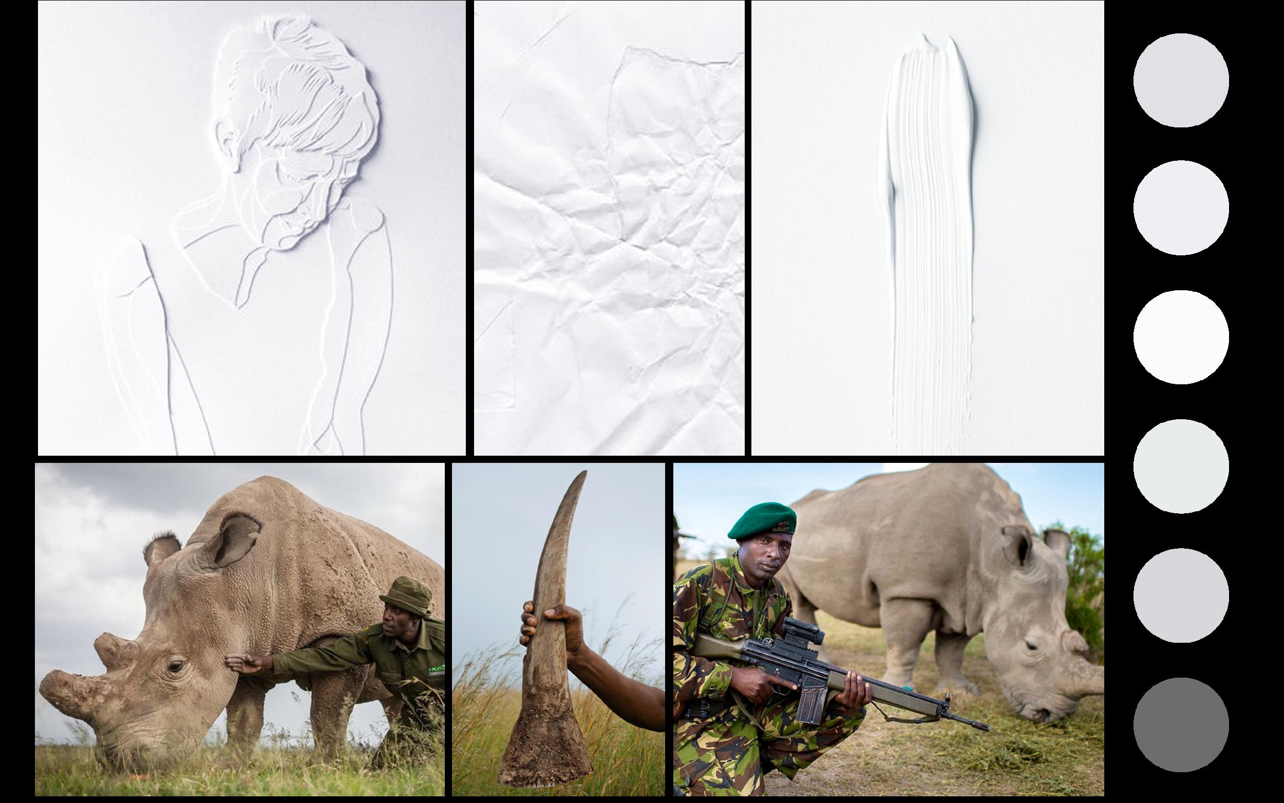 Rhino 1280 x 8002.png