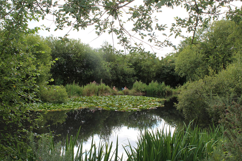 the woodland lake