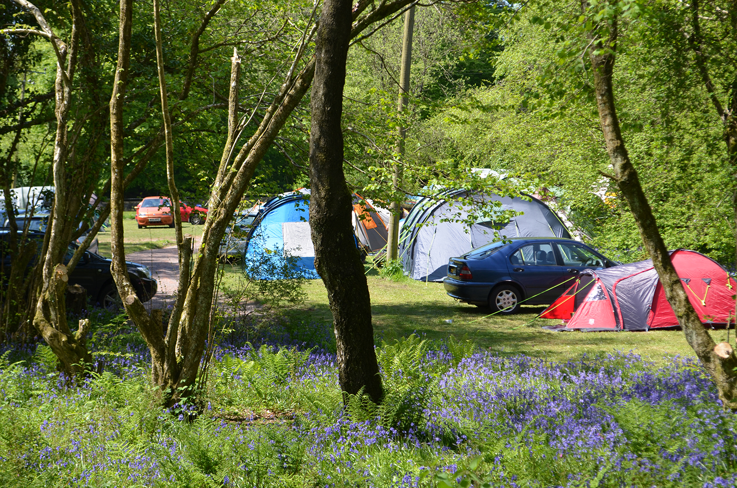 Camping in the Bluebells