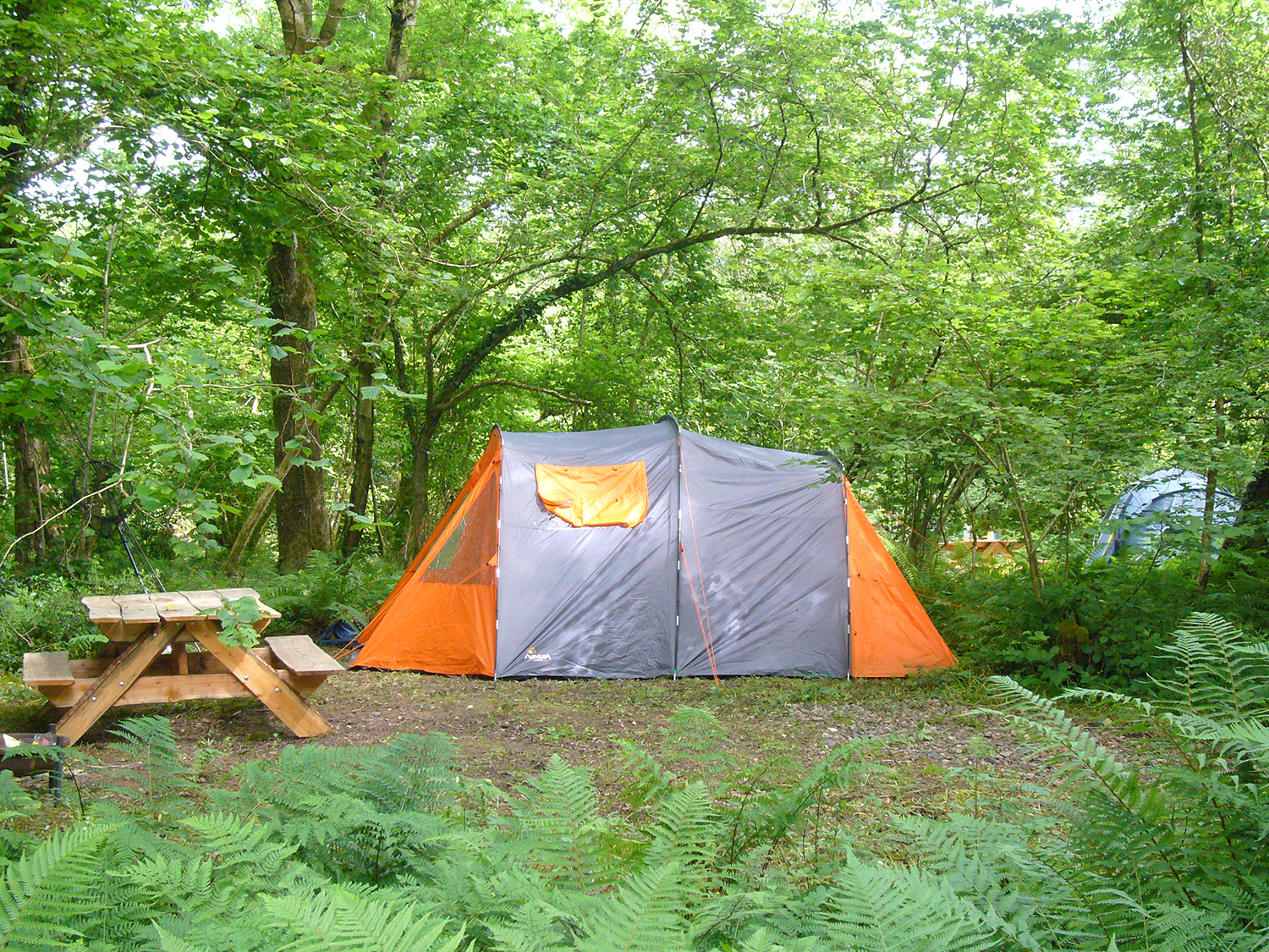 Private woodland camping pitches