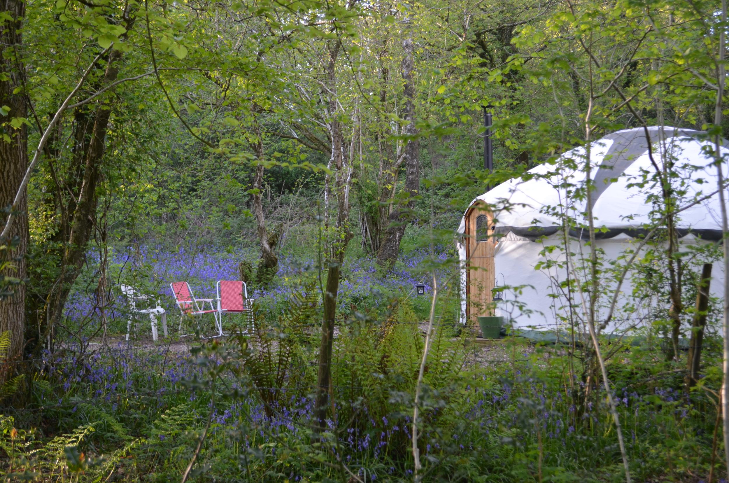 yurt in the bluebells