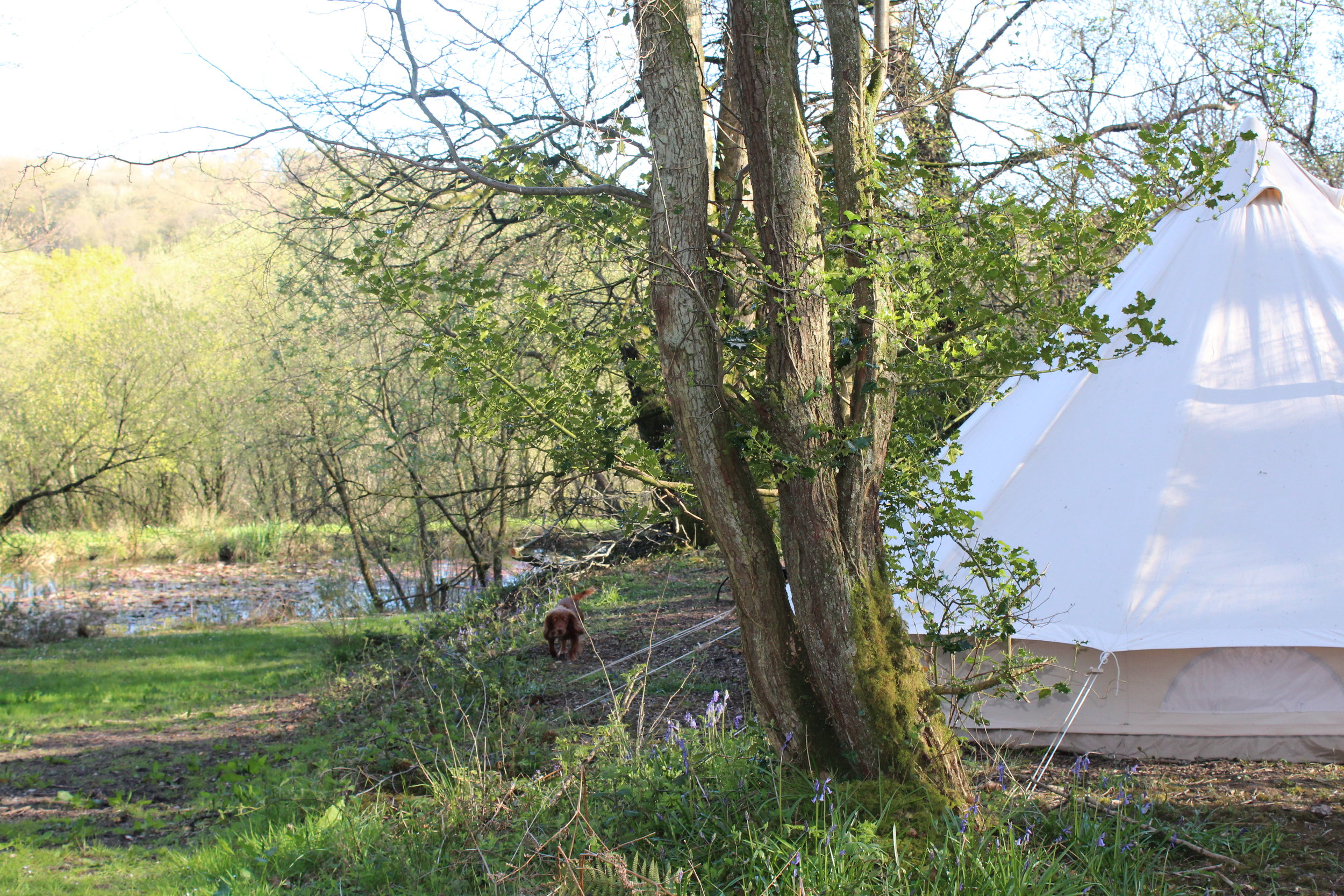 FROM £35 PER NIGHT - non-electric. maximum tent size of 7m