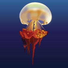 Flame Jellyfish (Rhopilema esculentum)